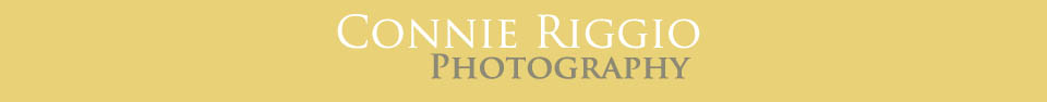 Connie Riggio Seattle Tacoma Photographer logo